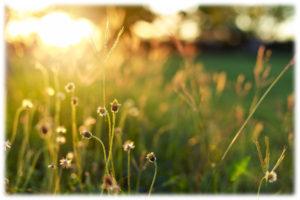 600-dusk-flowers