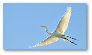 600-egret