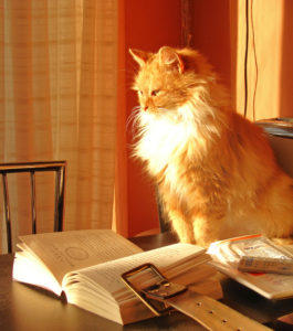 cat_with_book_